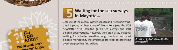 Waiting for the sea surveys in Mayotte
