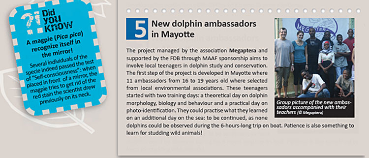 New dolphin ambassadors in Mayotte